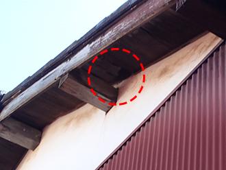 軒天に穴が開き、鳥の住処になっていた