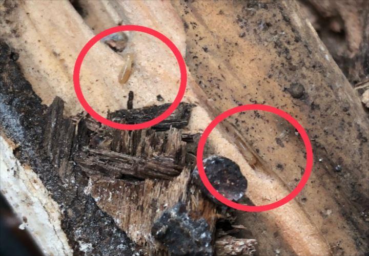 世田谷区成城で階段手摺の工事中、白蟻被害を発見しました