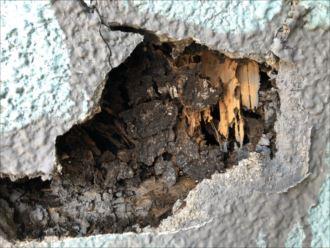 三鷹市牟礼でシロアリ被害に遭った柱を確認しました