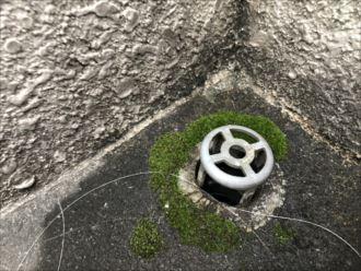 苔の生えた排水溝