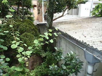 植栽と小波スレート屋根