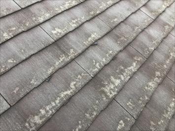 コロニアルクアッドの屋根