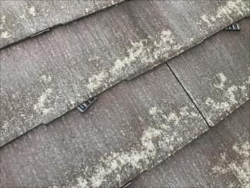 世田谷区上北沢にてコロニアルクアッドの屋根を調査しました