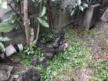 足立区西新井にて築60年瓦屋根の建物を調査すると鬼瓦、ケラバの瓦が落下していました