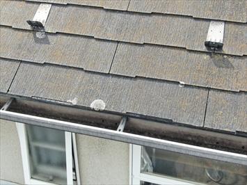 稲城市坂浜にて屋根の点検、屋根材にはコロニアルNEOが使われておりました。