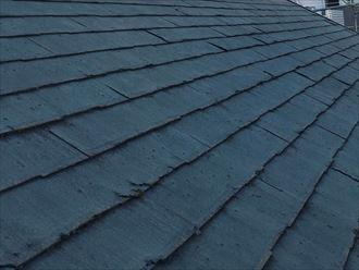 屋根北面のパミールの症状