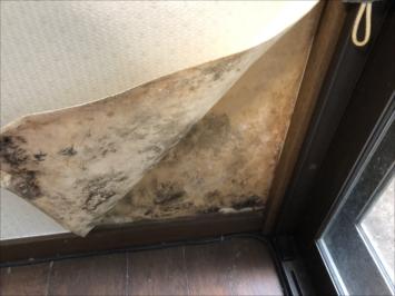 世田谷区下高井戸で雨漏りを調査、散水試験のご提案をしました