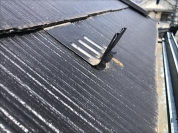屋根に生えた苔