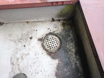雨漏りの原因になっている排水口