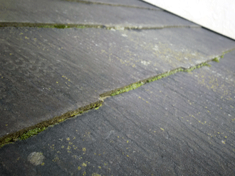 屋根に苔発生